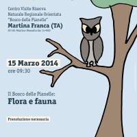 Il Bosco delle Pianelle: flora e fauna
