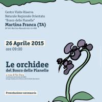 Le orchidee del Bosco delle Pianelle