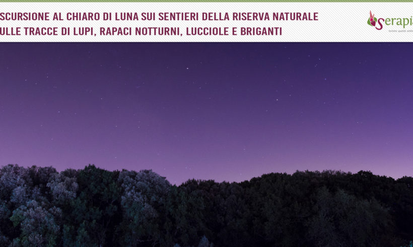 Sotto le stelle nel Bosco delle Pianelle