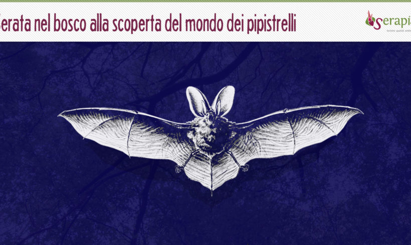 La notte dei pipistrelli