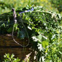 Raccolto e mangiato: le erbe in cucina – 1 marzo 2020