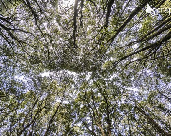 L'ascolto del bosco – 9 febbraio 2020