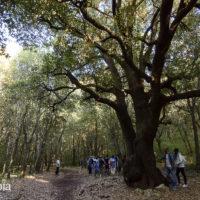 Il segreto del bosco con pranzo in masseria – 21 Marzo 2020